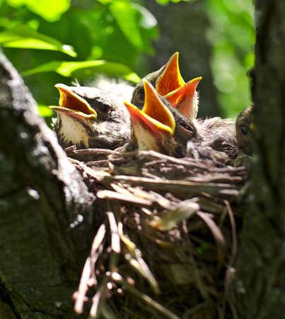 robin s classic nest Stock Photo - 14586269