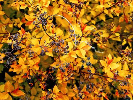 brushwood: fall foliage Stock Photo
