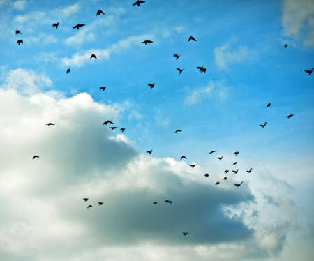 migratory: migratory birds