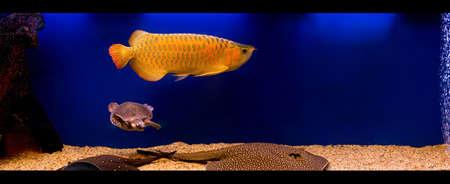 pet valuable: luxury aquarium