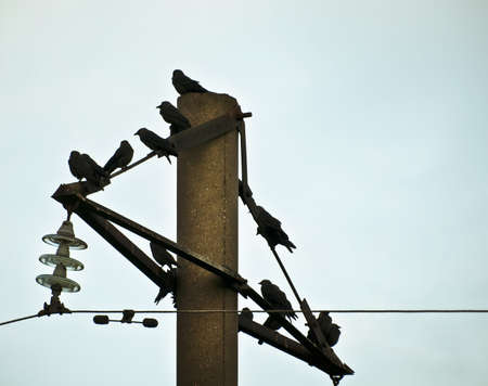 birds on telegraph pole Stock Photo - 18198566