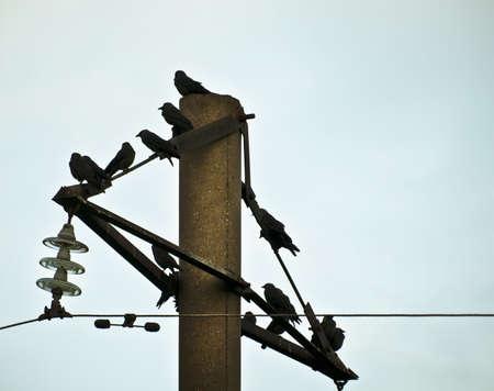 telegraaf: vogels op telegraafpool