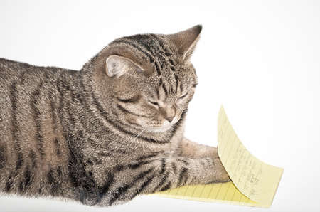 somnolence: kitten with notepad