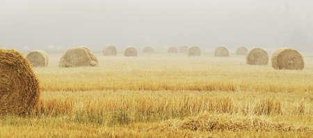 feedstock: field with haystacks