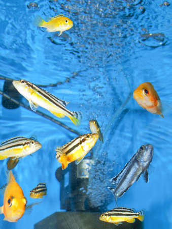 aquarium with fishes and equipment Stock Photo - 18712334