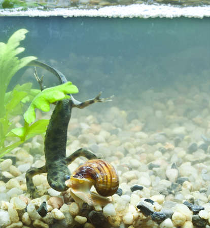 triton and snail Stock Photo - 19113967