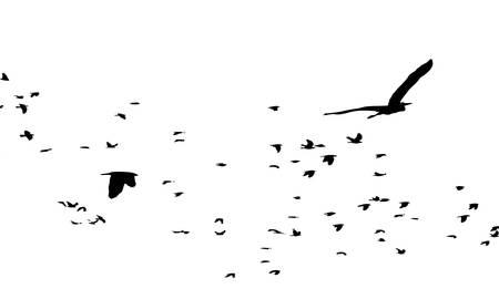 aves migratórias Ilustração