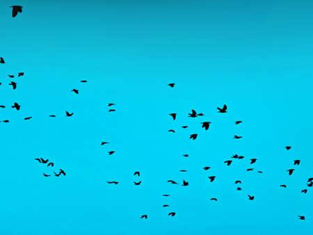 bandada pajaros: bird flock Foto de archivo