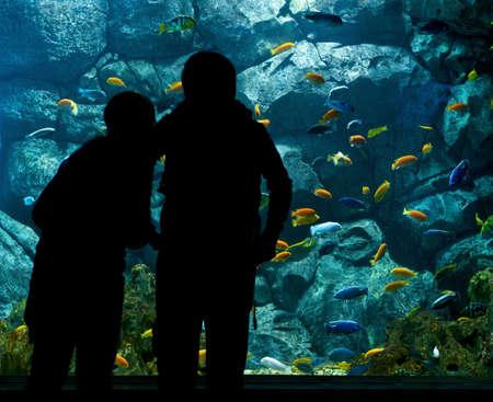 public aquarium: people near big aquarium