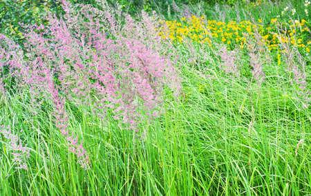 herbs wild: floraci�n hierbas silvestres