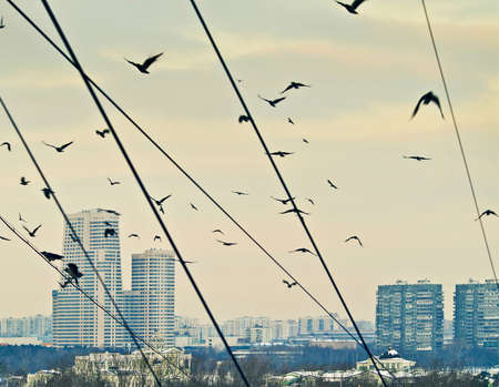 groupings: cityscape with crow flock