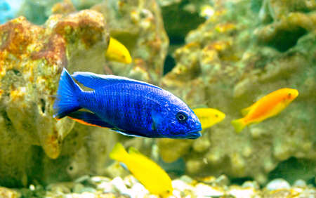 fishes in coral reef Stock Photo - 21686417