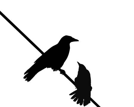 crows: crow pair Illustration