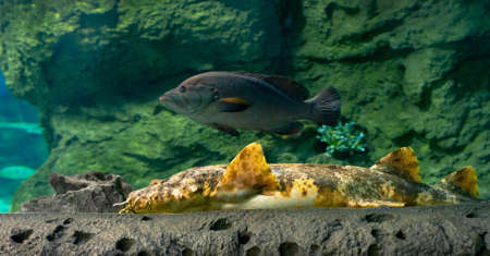 bottom shark and grouper in grotto Stock Photo - 22082888