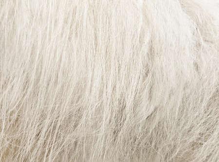 ovine: sheeps fur