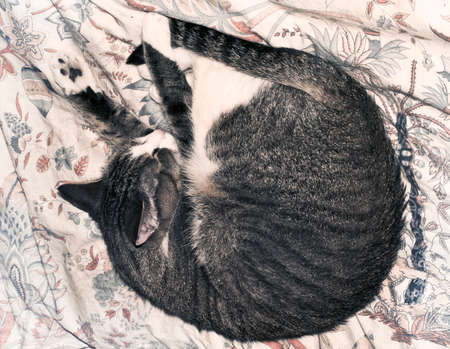 in somnolence: sleeping cat