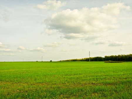 grassy field: field landscape