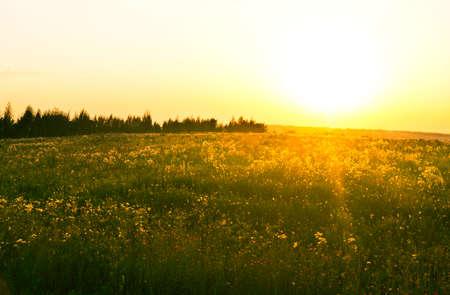 grassy field: sunset in field Stock Photo