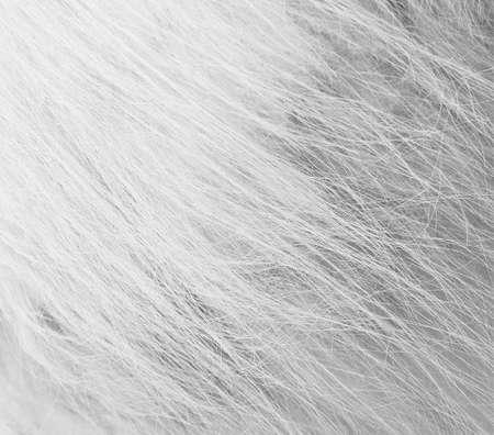 stroked: sheep fur Stock Photo