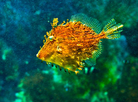 boxfish: coral fish Stock Photo