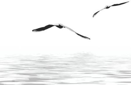 albatross: sea gulls Illustration