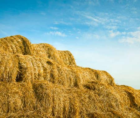 feedstock: giant haystack Stock Photo