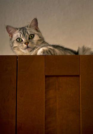 atop: cat atop Stock Photo