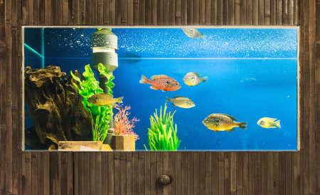 freshwater aquarium: luxury aquarium