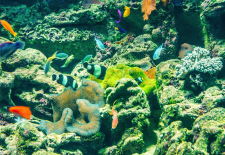 ichthyology: coral reef