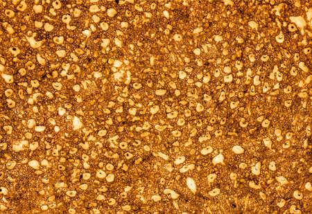 spongy: pancake texture