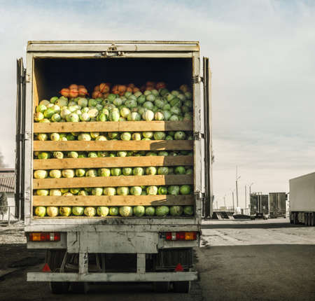 laden: trailer laden with cabbage