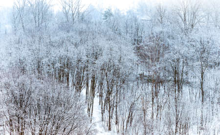 boles: winter park Stock Photo