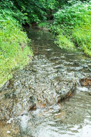 rivulet: forest brook