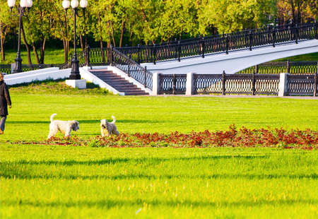 dog park: dog owner in park lawn Stock Photo