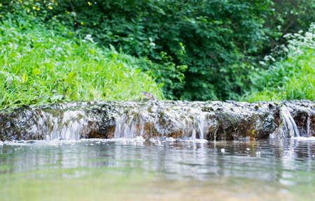 potable: forest cascade