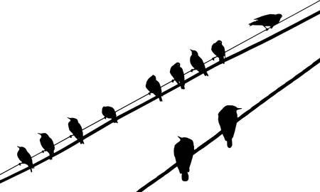 migratory: birds on wires Illustration