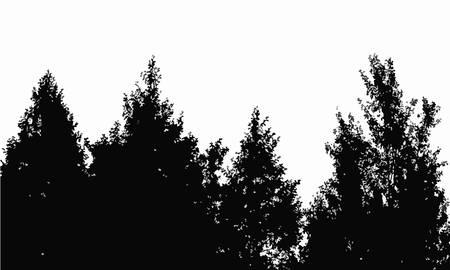 arboles blanco y negro: silueta bosque
