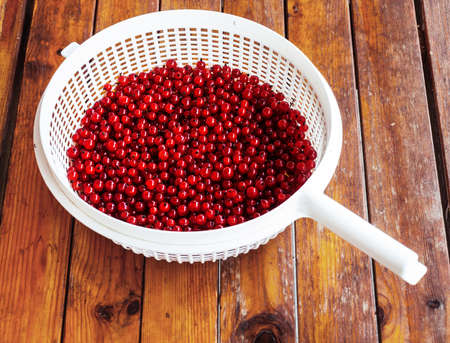 bolter: red currants in sieve Stock Photo