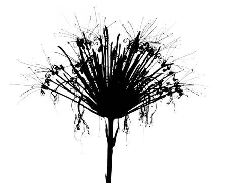 silhouette fleur: fleur tropicale