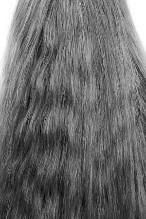 hairy girl: female grey hair Stock Photo