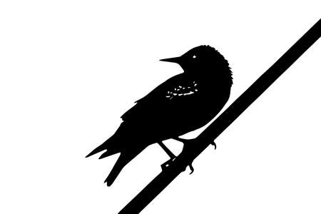 classic contrast: the Starling