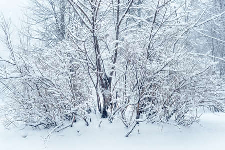 it's: winter forest, its snowfall Stock Photo