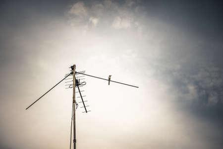 antenna: antenna and wagtail bird