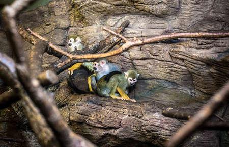 primate: primate colony