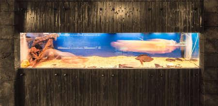 pez pecera: acuario de lujo