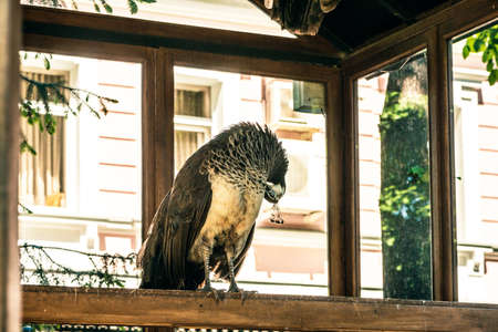 indoors: peafowl indoors