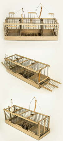 pitfall: the bird-trap