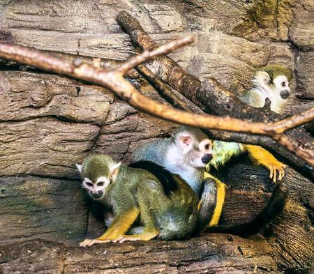 colony: primate colony