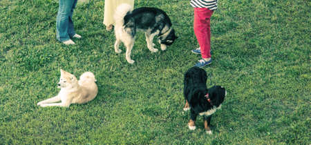 grassfield: dog owners