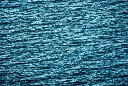 surface: sea surface